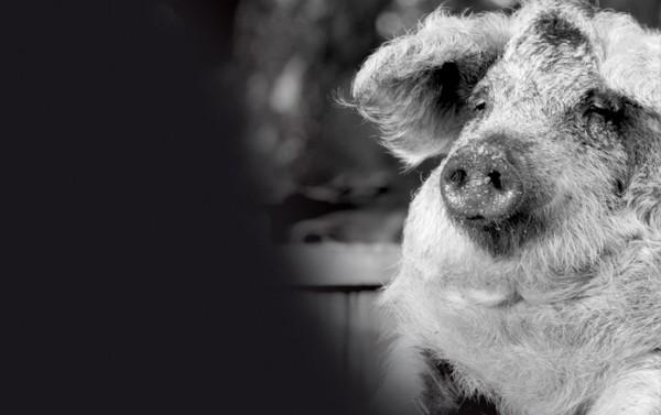 Gegrillte Schweinshaxen